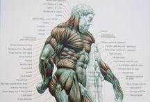 anatomy reference models
