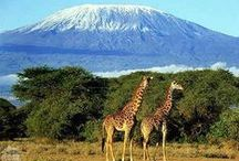 Africa / Explore the World with Travel Nerd Nici, one Country at a Time. http://TravelNerdNici.com  / by Travel Nerd Nici