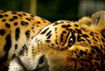 World's Amazing Wildlife / Explore the World with Travel Nerd Nici, one Country at a Time. http://TravelNerdNici.com