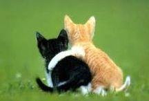 FUNNY CATS / Gewoon leuke Katte-foto's....