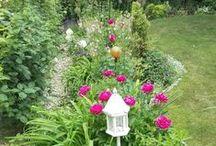zahrada-garden