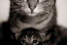 Animals~