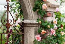 Roses-růže