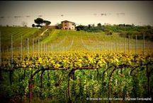 C'er(b)a una volta - Cantina Terre Margaritelli, Torgiano / 13.04.2014 / Alla scoperta delle erbe spontanee di campo passeggiando tra le vigne