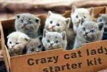 Katti Cats