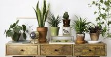 ° Houseplants ° / Plant Decoration Ideas / Planthouse Decor / Bohemian Home Style Inspiration / Succulent / Indoor Plants / Interior Design / Indoor Gardening / Plants all over the house