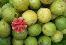 Tajemnicza gujawa / Pyszna, zdrowa i słodka niczym cukierek gujawa przywędrowała do nas z Indii.