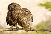 Owls  / Thank you for following. Have fun pinning. / by Kelly Tran