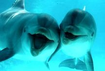 Sea animals & fish  / Thank you for following. Have fun pinning. / by Kelly Tran