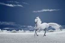 Horses / Thank you for following. Have fun pinning. / by Kelly Tran