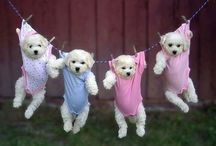 Animals wearing clothes & hats / Thank you for following. Have fun pinning. / by Kelly Tran