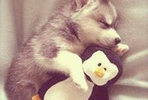 Cuties / Adorable animals and pictures to bring a smile to your face and make you go awwwwww :')