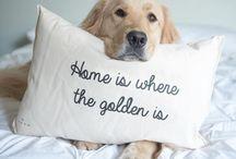 Crias de cães / Se você gosta de cães fofos, aqui é onde os vai encontrar