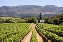 Paarl, Cape Winelands / The town of Paarl has a unique character, not least because vineyards still grow in between residential neighbourhoods maintaining a country feel to a town virtually the size of a small city ... For additional info please visit http://www.sa-venues.com/attractionswc/paarl.php