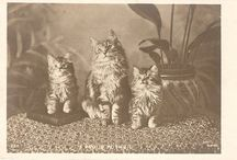 Vintage Cats / by Gloria