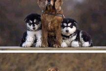 Beautiful dogs / Dogs I like
