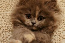 Kittens / Cute pictures from cats and kittens