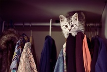Nikola Linhart's Whimsical Closet! / My closet is open.  They say about me I dress as a vagabond. They say about me I put on everything.