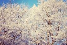 Norfolk in Snow