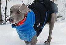Dog Coats & Rain Jackets / Keep your dog warm & cozy! Find the best winter dog coats and fido fleece jackets for cold weather. Find the best rain jackets for rainy seasons.