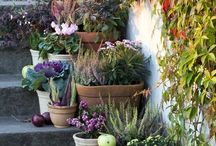 jardins , terasse