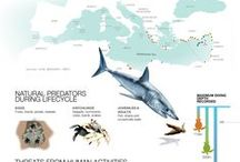 Sea Turtle Facts / Did you know? Infographics, pics and interesting facts about sea turtles from all over the world