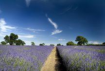 Lavender / Minner meg om mamma