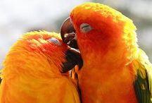 Parrots / Parrots | Parakeets