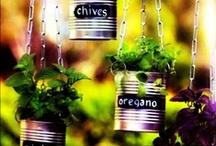 live: garden