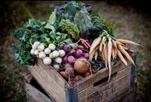 Farming is Beautiful / by Simple Gifts Farm