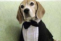 CÃES / Adoro cães, melhor AMIGO DO  HOMEM.  / by rita riboldi