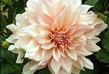 Flower Varieties We Offer / Fabulousflorals.com  offers up to 2500 different flowers that can be shipped direct to your door.