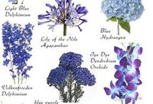 BLUE Flowers / The prettiest BLUE flowers ! Order wholesale DIY flowers online. #blueflowers #diyflowers #wholesaleflowers #bluebouquet