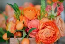 ORANGE Flowers / Bright and cheerful  Orange flowers for your wedding or event. Order wholesale DIY flowers online. www.fabulousflorals.com  #orangeflowers   #diyflowers #wholesaleflowers