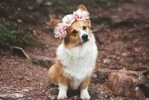 Pets at Weddings / Why not have your best friends at your weddings! We LVE Pets at weddings! Make them an adorable flower garland or corsage for their collar with DIY Flowers!  Buy bulk wholesale flowers online www.bulkwholesaleflowers.com #aisle #petsatweddings #dogs #cats #horses  #diywedding