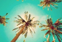theme - palms