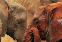 theme - safari