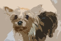 yorkshire terrier / by Female