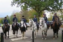 Abbotsholme Equestrian / Our horses are an important part of the school. Pupils from age 4 can enjoy learning to ride!