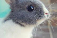 All Animals are Amazing!