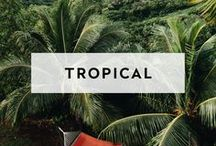 TROPICAL / Style for your Tropical Venue Setting. A curated list of stylish essentials for your next tropical event venue.