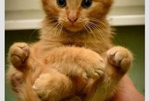 cute cuddly cats / cute cuddle cats. It is why we love em!