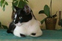 Cat Box Zen /  The adventure of the zen cats begin...Www.catboxzen.com