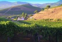Wine Farm Tarantola Sicily