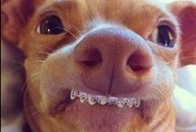 BRACES!!!! / by Laster Orthodontics