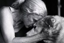 Heartwarming Animal Photos / These photos convey the true love of animals and will definetly warm your heart!