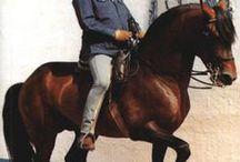 Horsemanship & Training Tips