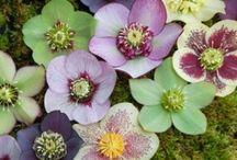 Flowers / by Lindsay Garner