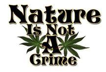 Legalize it!! ✌️