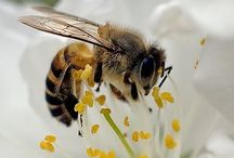 Bees / I would love to keep bees someday as I find their social interactions fascinating.